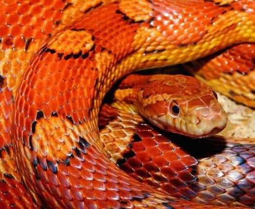 snake-579682__480