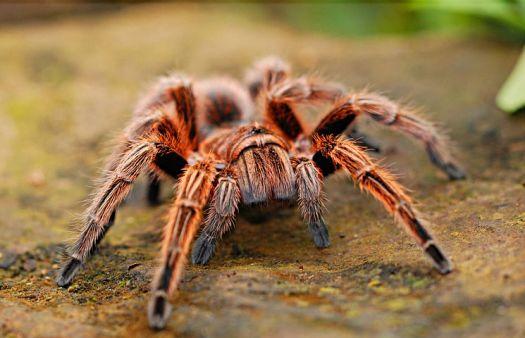spider-2740997__480