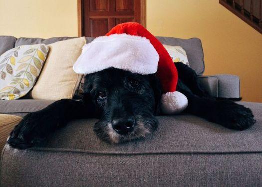 Perro navidad 1