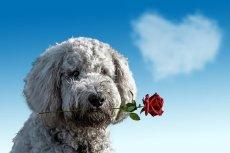 valentines-day-3135789__340